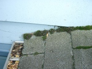 Moss - Wayfare Pest Solutions, Structural Pests