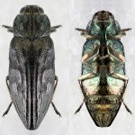 Wood Boring Beetle - Wayfare Pest Solutions, Structural Pests