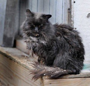 Feral Cat - Nuisance Wildlife Removal, Wayfare Pest Solutions