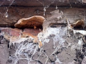 Fungus - Wayfare Pest Solutions, Structural Pests